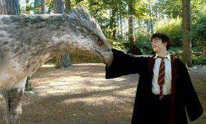 A_real_life_Hippogriff_from_Harry_Potter_exists_in_Uganda